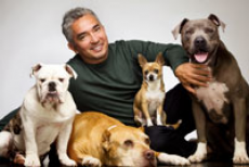 Cesar Millan Live - The Dog Whisperer