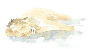 Sleeping-Lion-Sketch-ANicholls