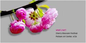 042614_Cherry Blossom Festival at Pelham Art Center