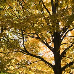 Fall colors at Caramoor  in Katonah, New York. Photo by Gabe Palacio