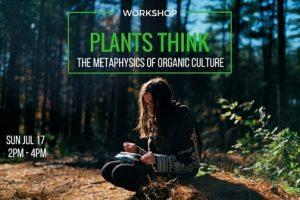 plants think