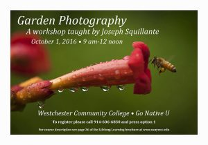 Garden Photography workshop invitation; October 1, 9 am to noon at Westchester Community College, Go Native U